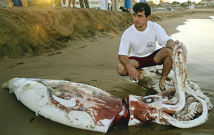 http://www.esys.org/news/riesen-tintenfisch.jpg